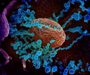 """De ce e atât de contagios coronavirusul. """"Strategia"""" prin care păcăleşte sistemul imunitar"""