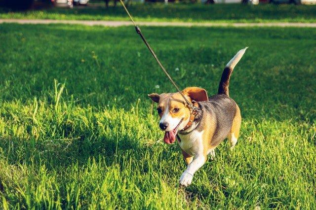 Antrenamentele sunt pentru toți câinii